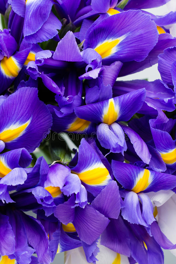 Iris flowers background, spring floral patern. stock photos