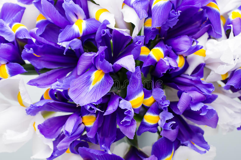 Iris flowers background, spring floral patern. royalty free stock image