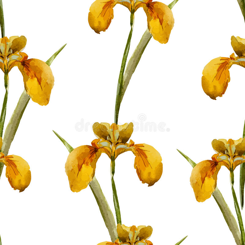 Iris flowers pattern royalty free illustration
