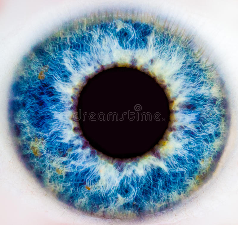Iris of a human eye stock photography