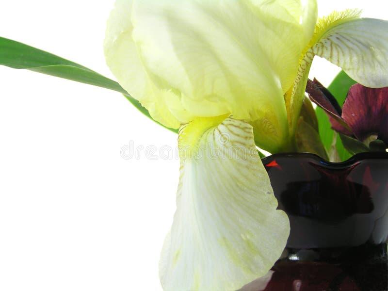 Iris jaune dans le vase rouge photo libre de droits