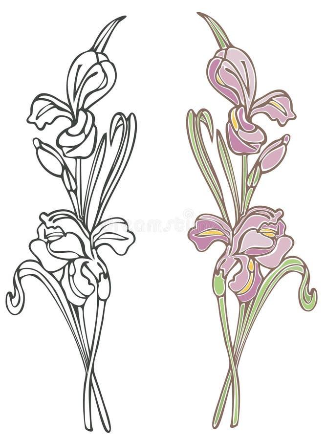 Iris pourpré illustration stock