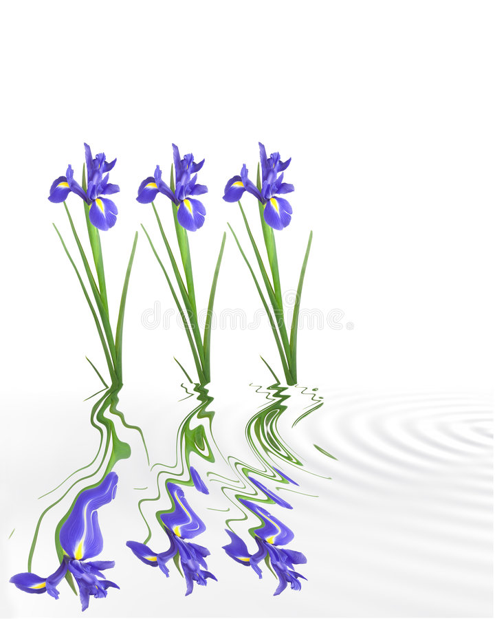 Download Iris Tranquility stock photo. Image of bloom, natural - 6208384