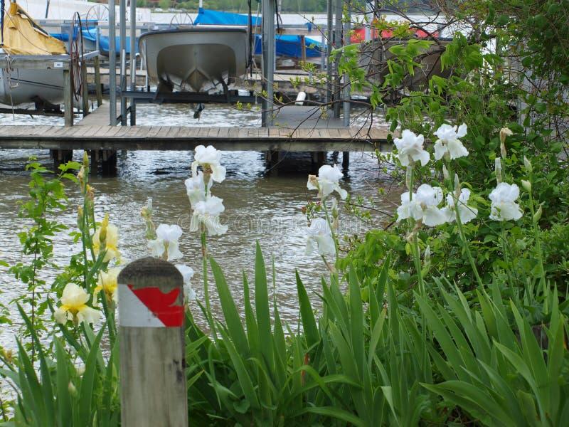 Iris und Jachthafen auf See-Wasser stockfotografie