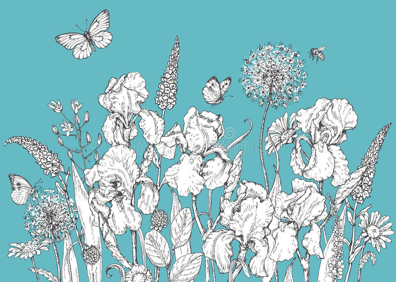 Iris, wild flowers and insects sketch royalty free illustration