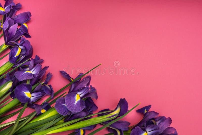 Irisbloemen op een roze achtergrond stock afbeelding