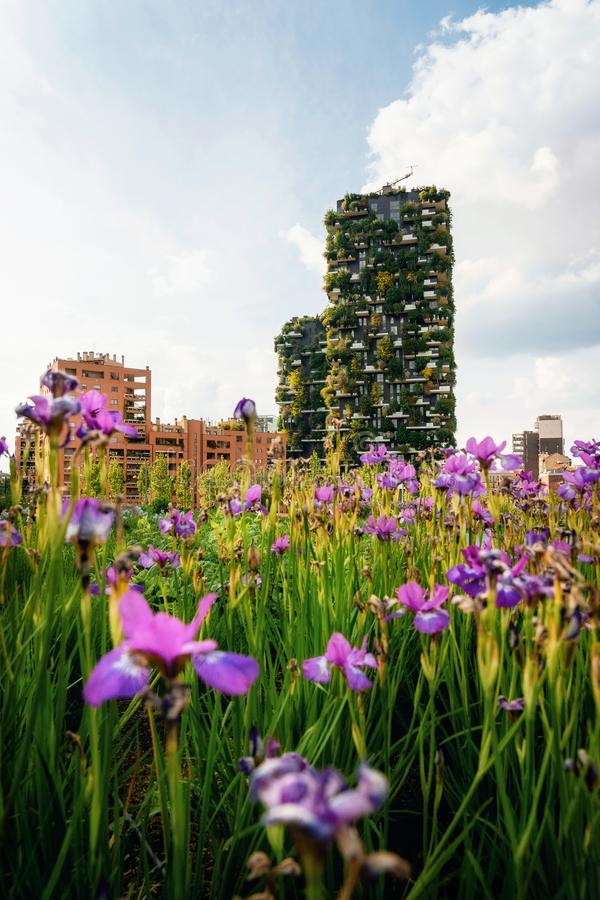 Irisblommor mot Bosco Verticale, Milano, Italien royaltyfria bilder