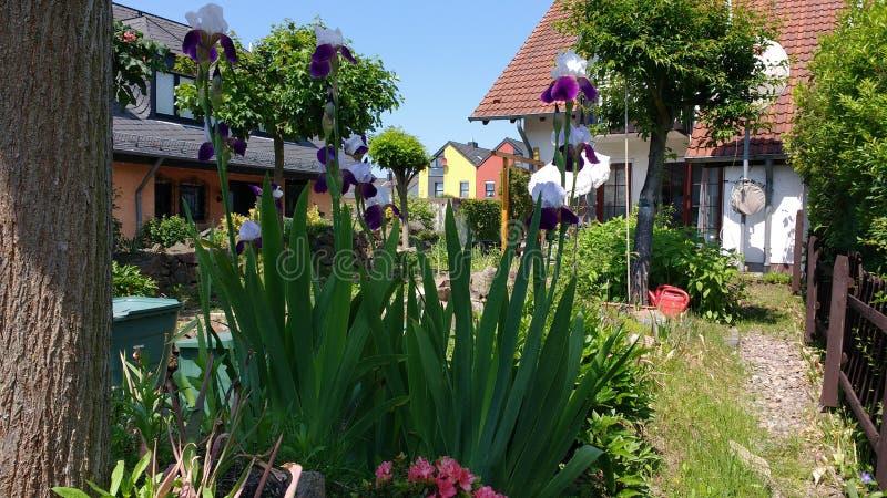 Irise μια θερινή ημέρα στοκ φωτογραφία με δικαίωμα ελεύθερης χρήσης