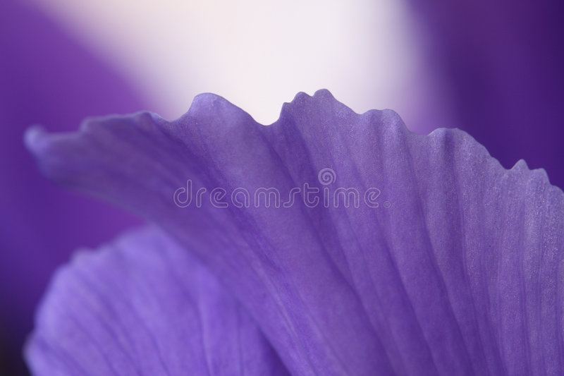 Irise. stockfoto