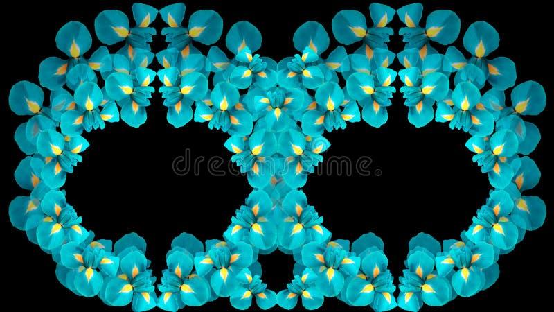 Irise des fleurs de turquoise Deux anneaux cercles des fleurs sur un fond noir d'isolement Composition florale Pour la conception image libre de droits