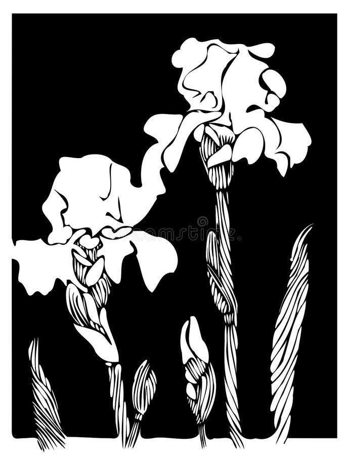 Irises royalty free stock photos