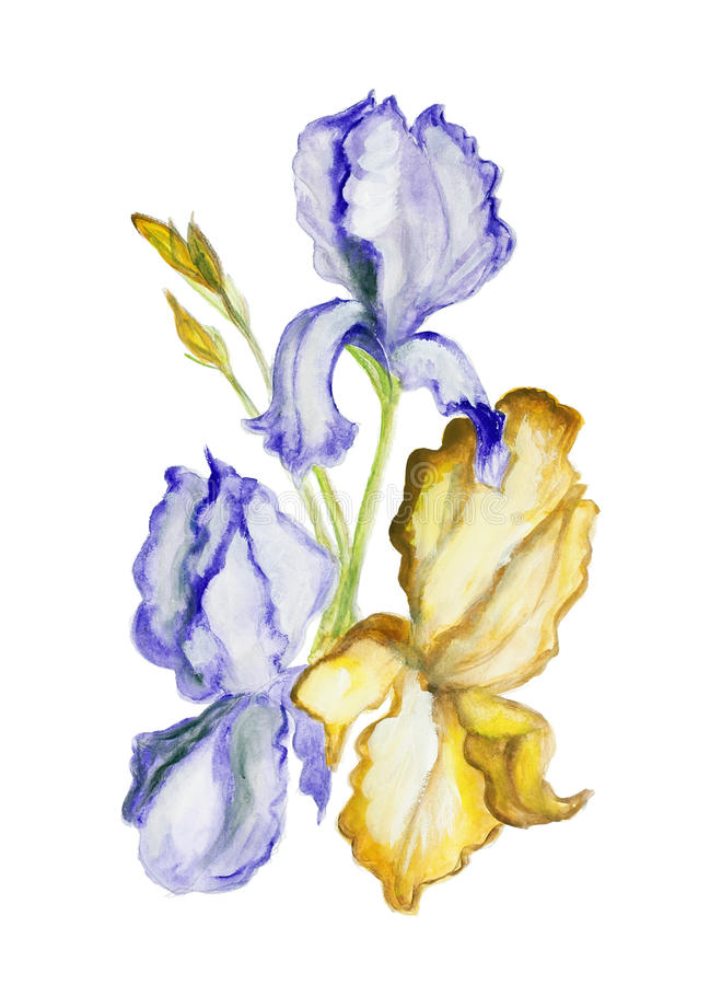 Irises flowers isolated art illiustration. Irises blue and yellow spring flowers isolated - handmade acrylic painting illustration on a white paper art vector illustration