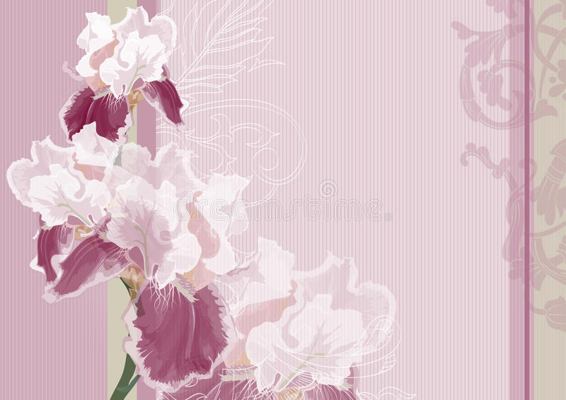 Irises on a pink background. Holiday greeting card or invitation to the wedding. Net background for the text of love. Irises on a pink background vector illustration