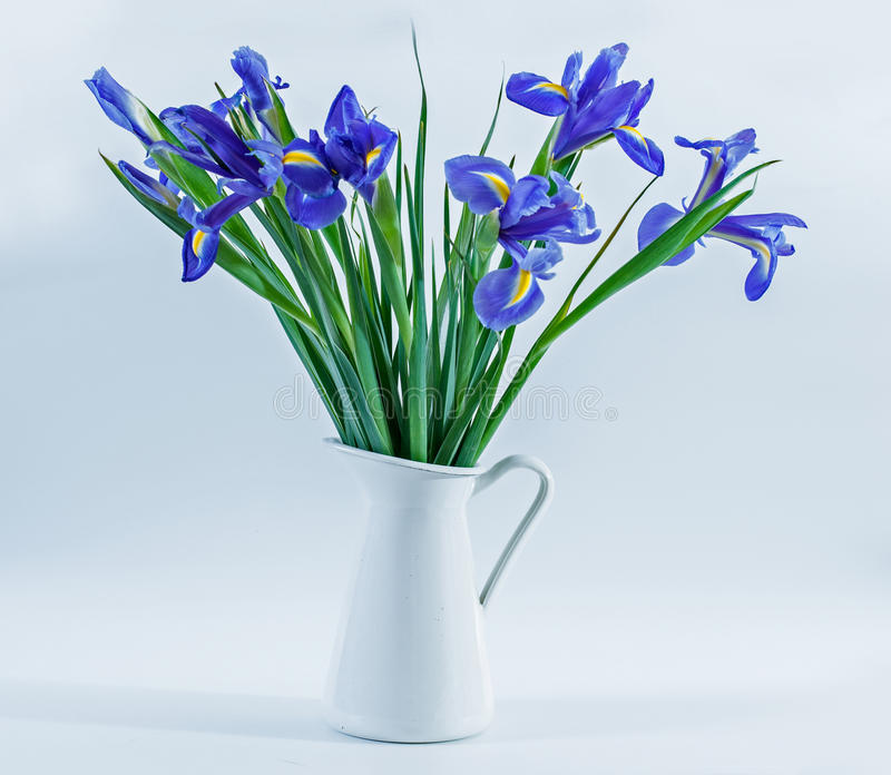 Irises in a Vase. Beautiful bouquet of irises in a white jug stock images