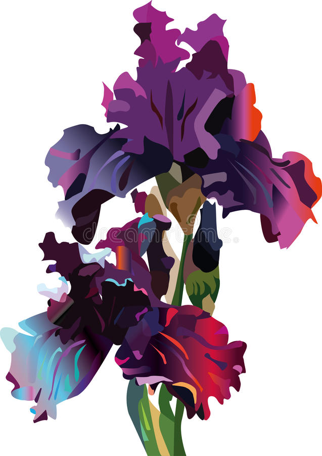 Irises. Vector. Expressive style. painting. The bright color solution. Sophisticated color transitions. despite the pictorial solution Image with a strong vector illustration