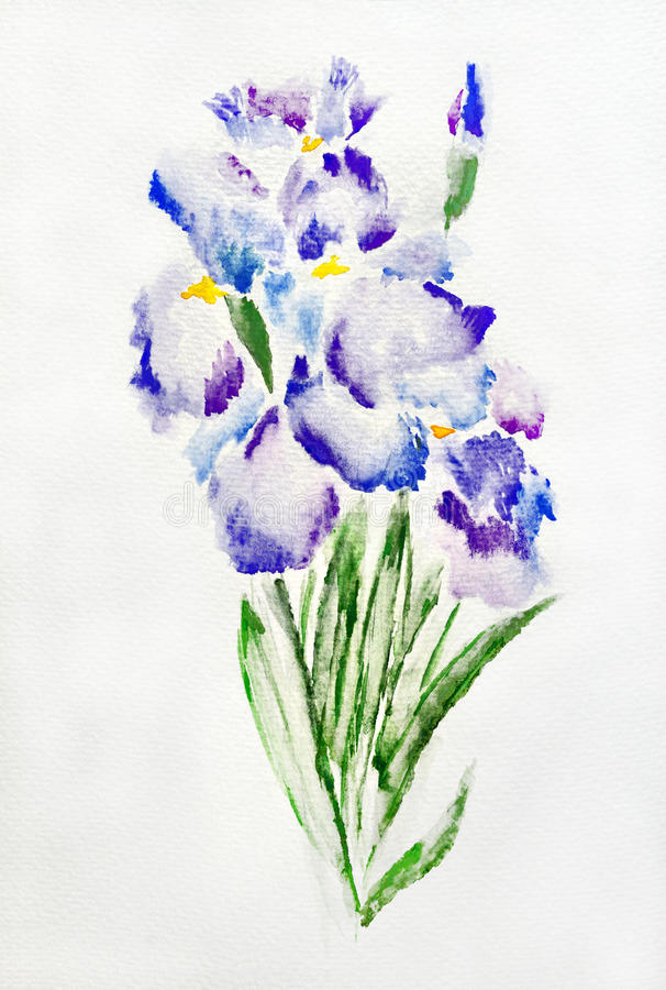 Irises watercolour painting. Image of blue and purple irises watercolor painting vector illustration