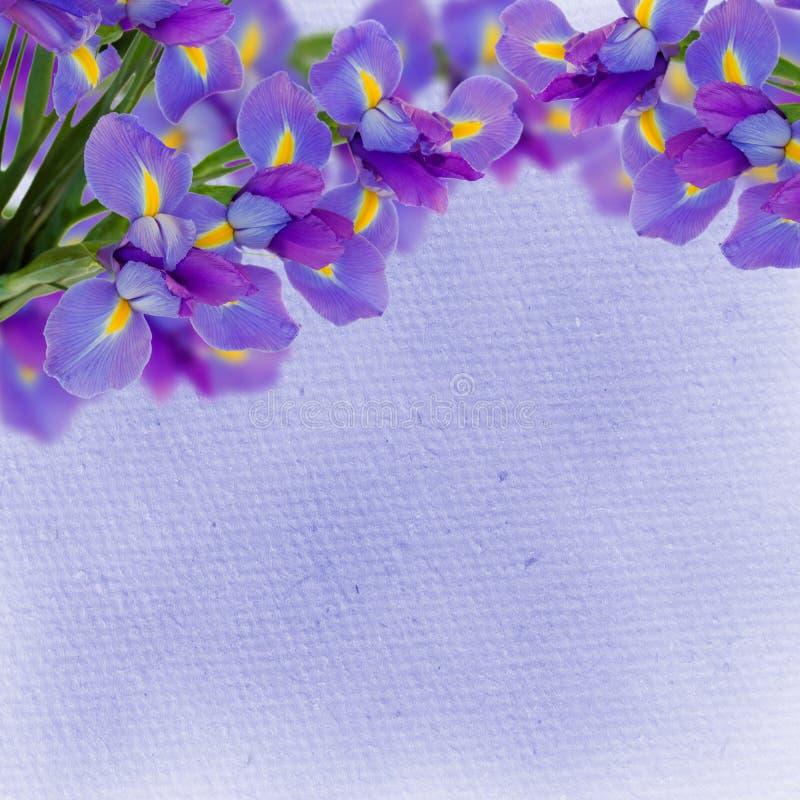 Irisen blommar bakgrund arkivbilder