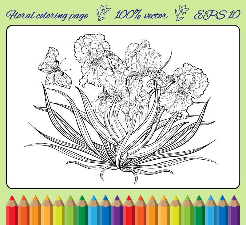 Irisez les fleurs et un papillon dans un cadre illustration stock