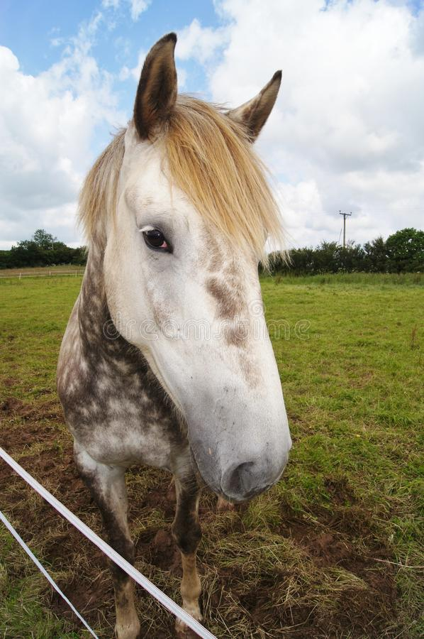 irish лошади проекта стоковое изображение