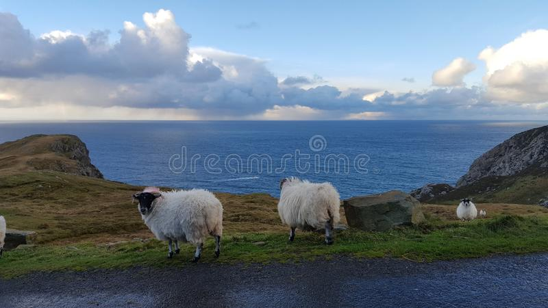 Irish coast royalty free stock photos