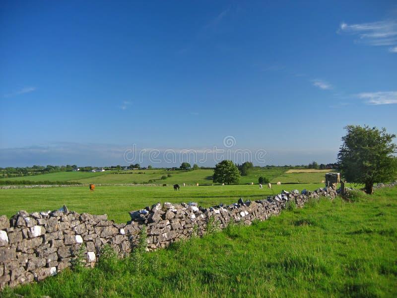 Download Irish countryside-summer stock image. Image of wall, walling - 538789