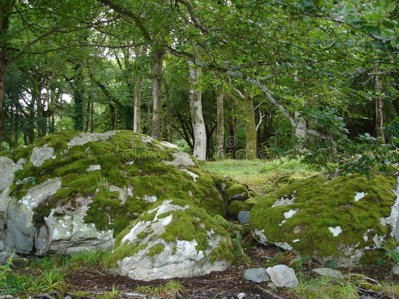 Download Irish Forest Royalty Free Stock Images - Image: 4516699