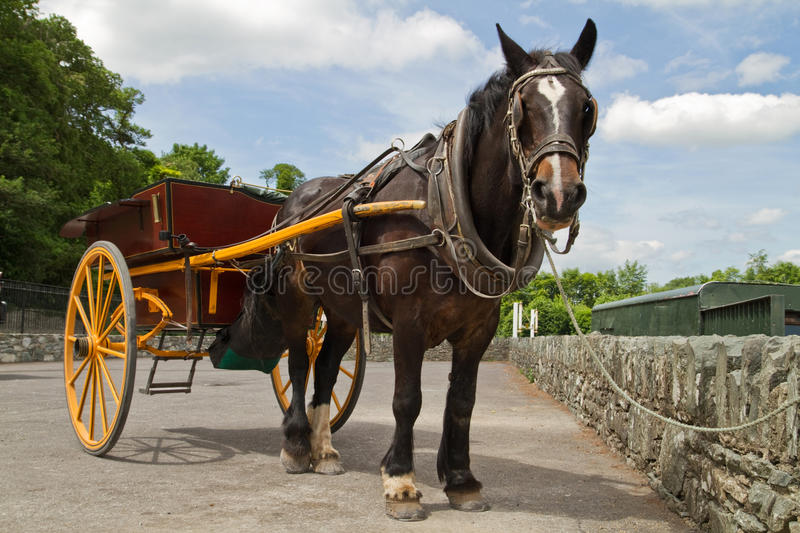 Download Irish horse stock photo. Image of work, county, countryside - 14900690