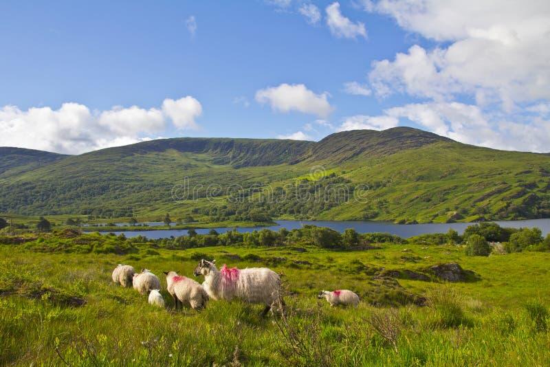 Download Irish landscape stock photo. Image of hill, cloudscape - 25680352