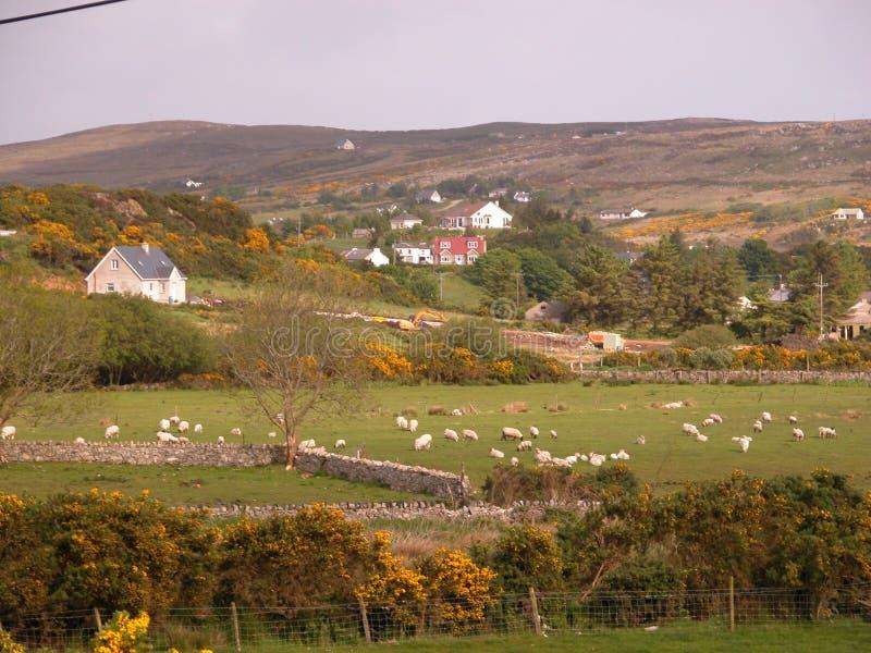 Irish landscape stock images