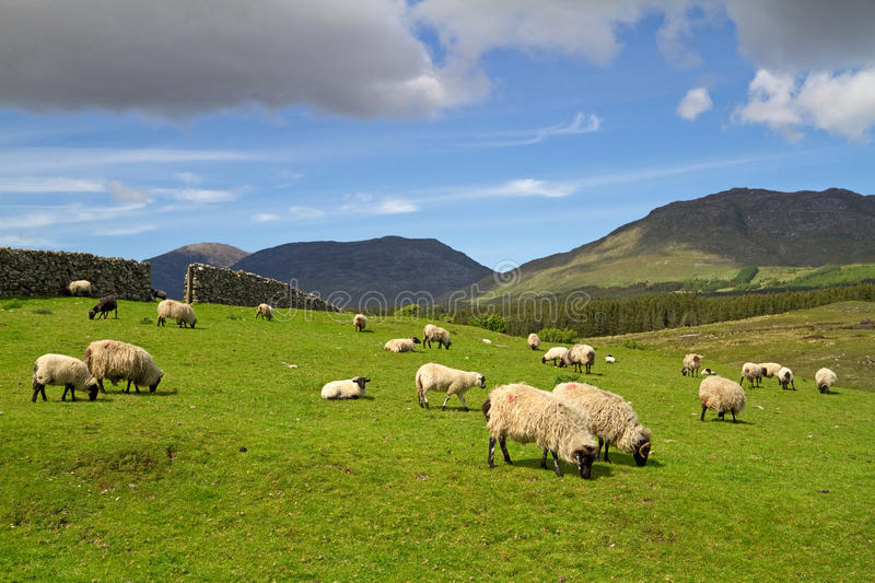 Irish Mountains Stock Photography
