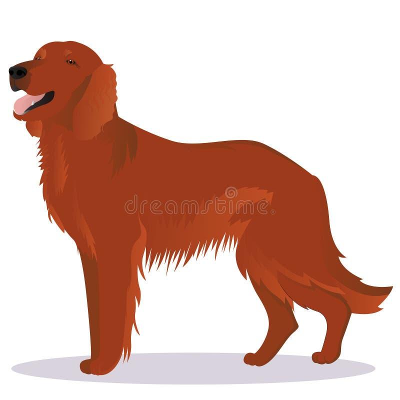 Irish red setter dog vector illustration