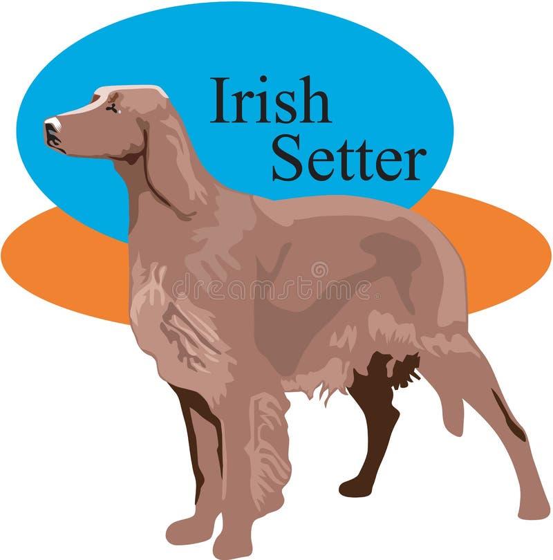 Irish Setter Vector Illustration vector illustration