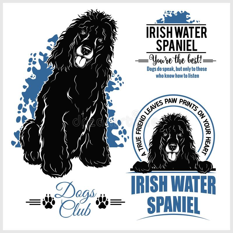 Free Irish Water Spaniel - Vector Template For T-shirt, Logo And Badges Royalty Free Stock Photography - 172109117