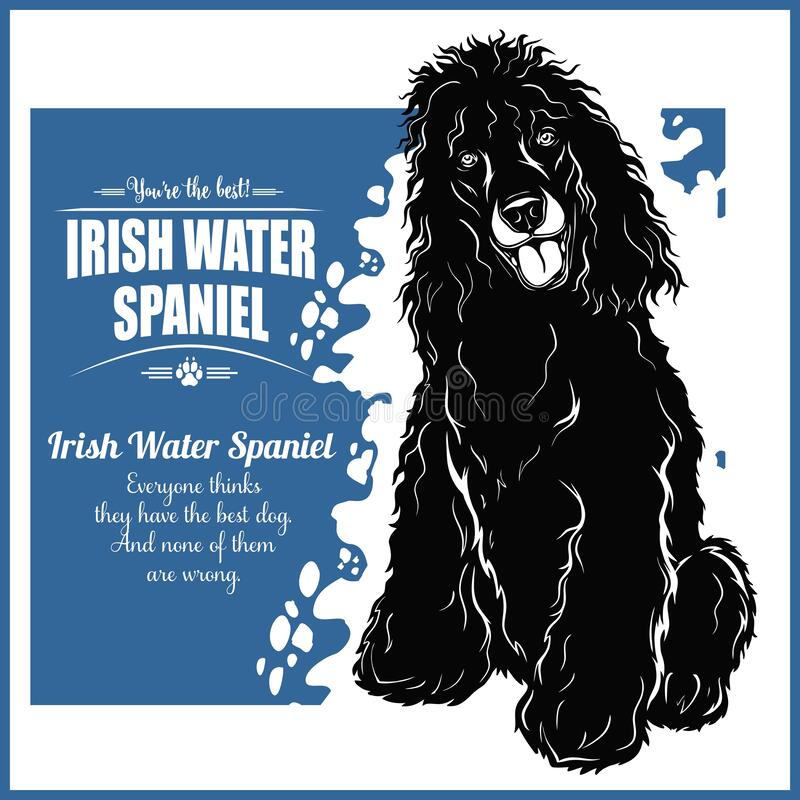 Free Irish Water Spaniel - Vector Template For T-shirt, Logo And Badges Royalty Free Stock Photography - 172175737