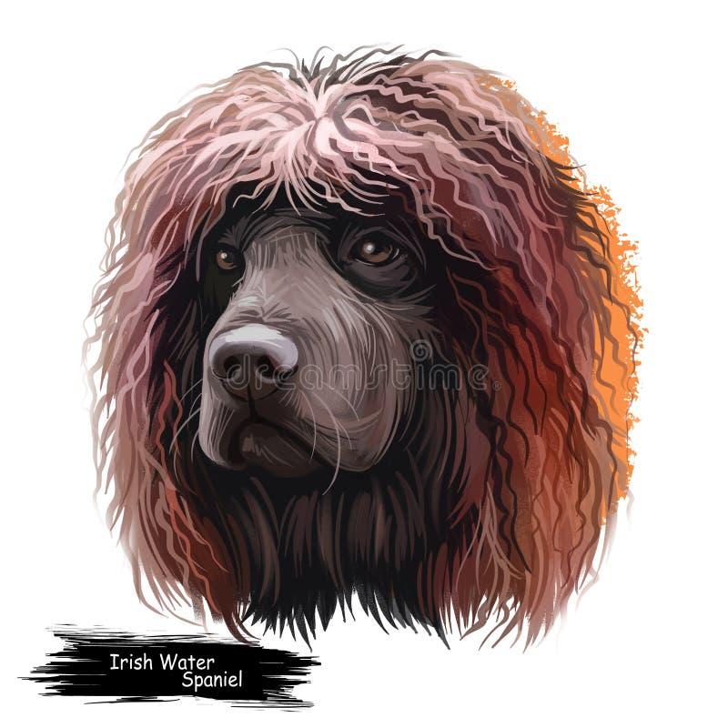 Free Irish Water Spaniel, Whiptail, Shannon Spaniel, Rat Tail Spaniel, Bog Dogdog Dog Digital Art Illustration Isolated On White Royalty Free Stock Image - 159544116