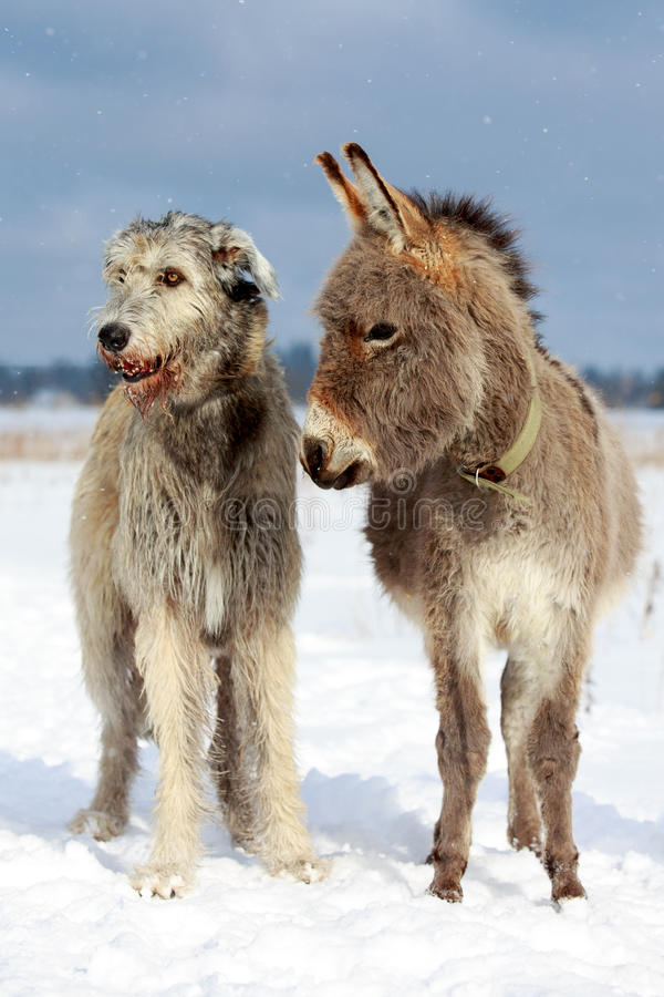 Download Dog and donkey stock photo. Image of nature, hound, winter - 30037576