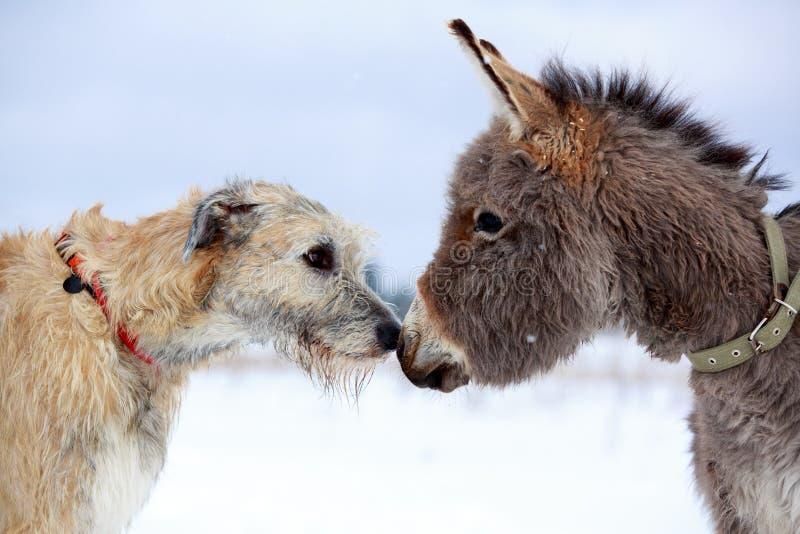 Download Dog and donkey stock photo. Image of nature, wolf, donkey - 30037810