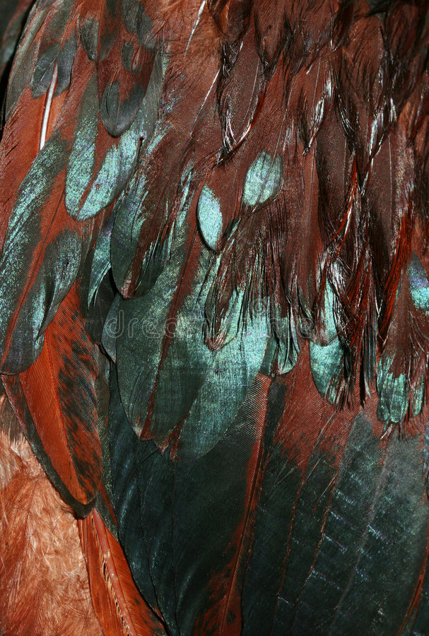 Irisierende Federn Lizenzfreies Stockbild