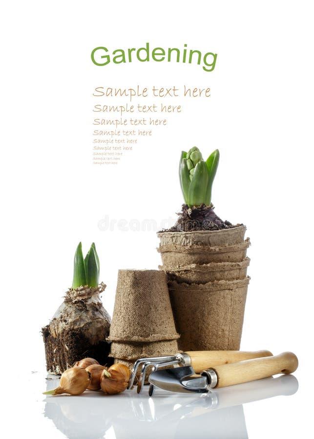 Iriskulor, inlagd hyacint och arbeta i trädgårdenhjälpmedel som isoleras på vit fotografering för bildbyråer