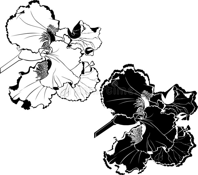 Irissenbloemen stock illustratie