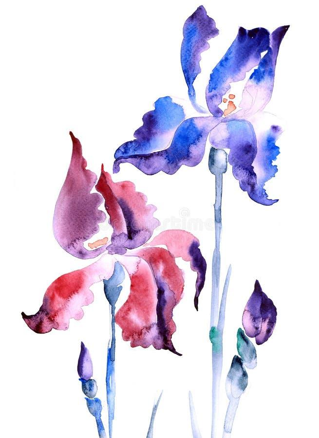 irisviolet royaltyfri illustrationer