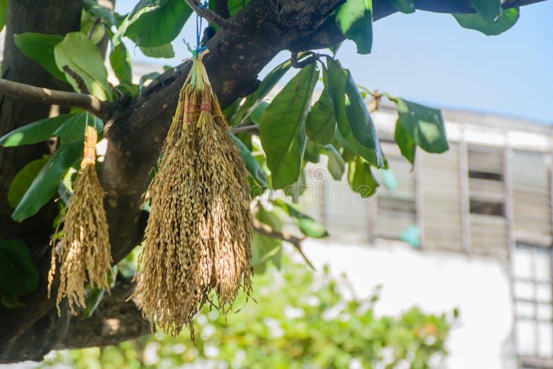Irländare hängning på trädet, att mata fåglar, sparvar och duvor royaltyfria foton