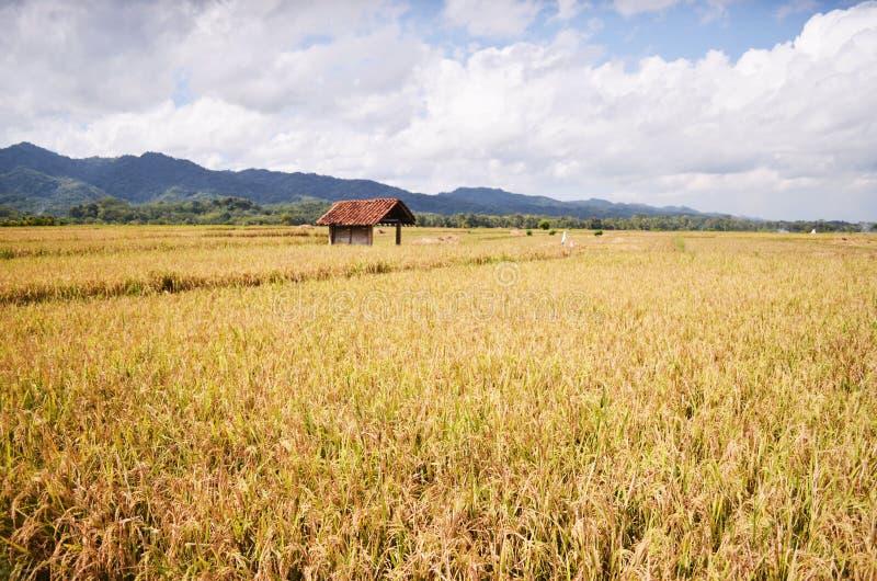 Irländarefält i brenggongbypurworejoen indonesia arkivfoton