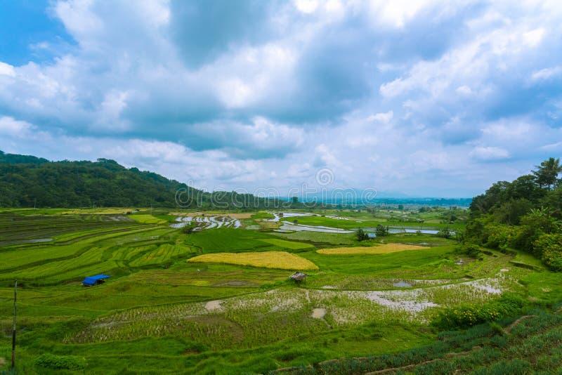 Irländarefält i Bukittinggi västra Sumatra Indonesien arkivfoto