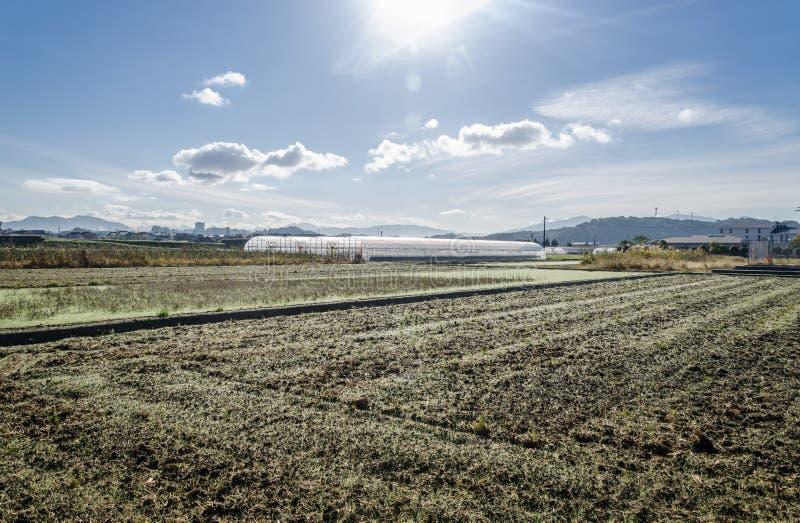 Irländarefält i Japan efter mest havest tid fotografering för bildbyråer