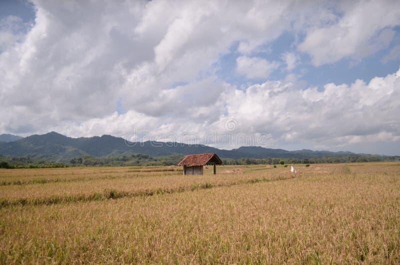 Irländarefält Purworejo Indonesien arkivbild