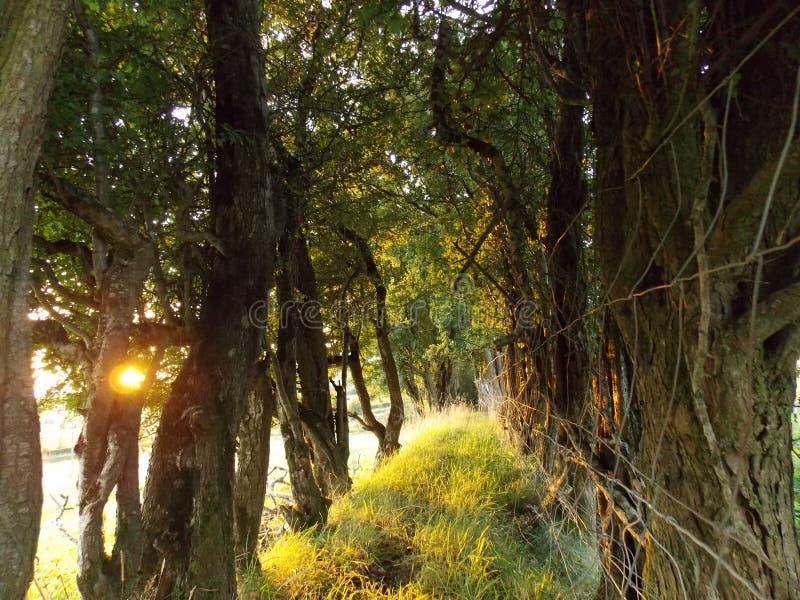 Irländskt berglantgårdland royaltyfria foton