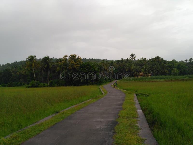 Irlandczyków pola Kerala obrazy royalty free