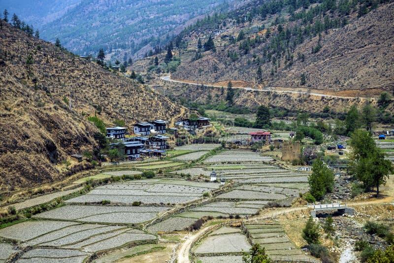 Irlandczyków pola r ryżowe uprawy blisko miasteczka Thimphu suszą - out podczas pory suchej zima, Thimphu, Bhutan zdjęcie stock