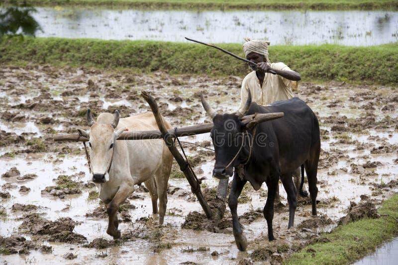 Irlandczyk śródpolny pobliski Karaikudi India - Tamilski Nadu obrazy royalty free